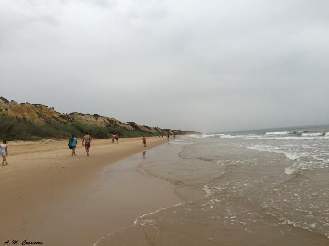 Playas Doñana (43)