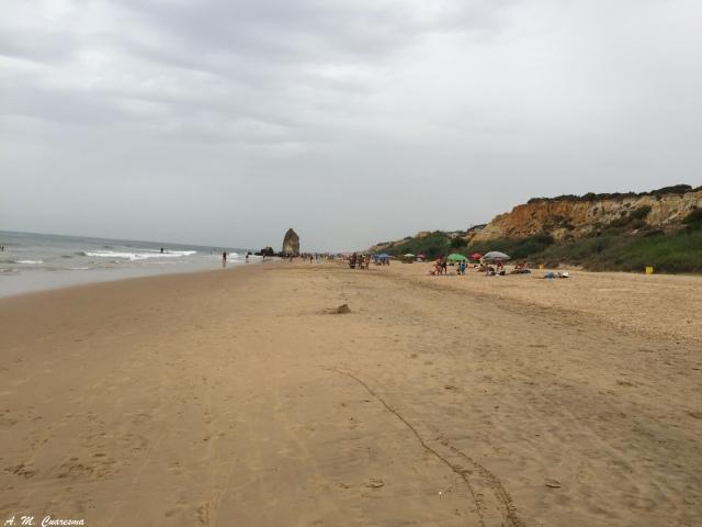 Playas Doñana (44)