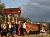 Romería de Aroche 2016 (39)
