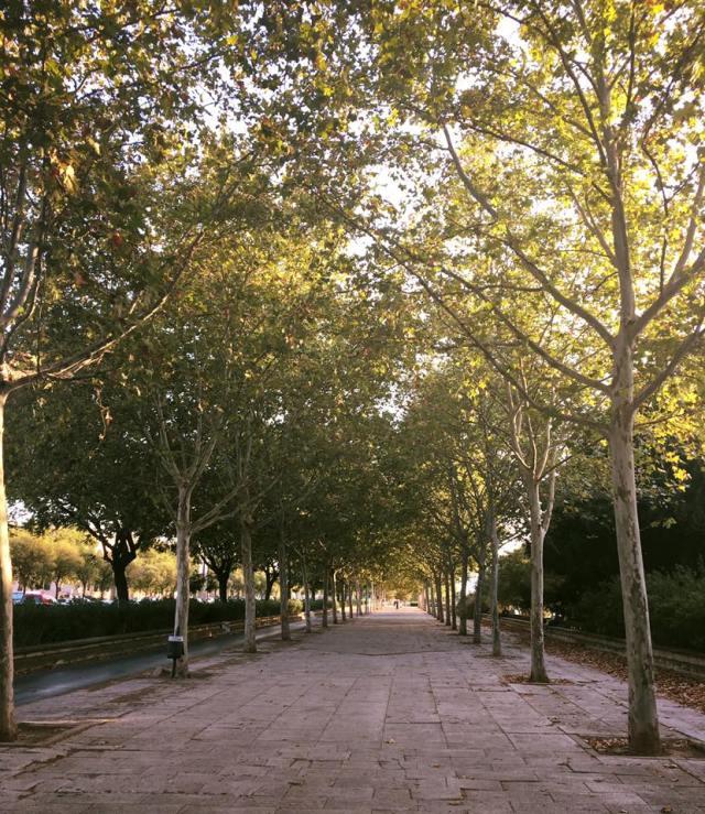 3-irene-catalan