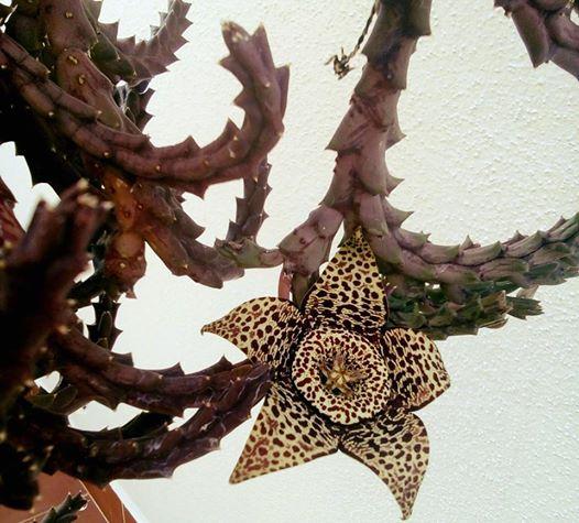 9-juan-carlos-peneque