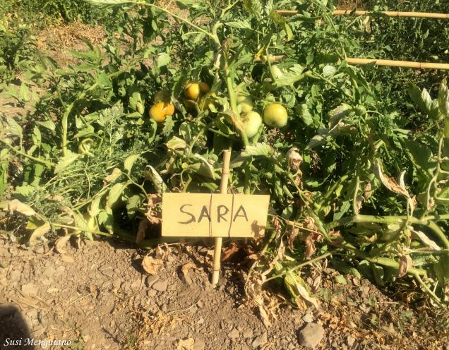 Sebas Tomates Felices (11)